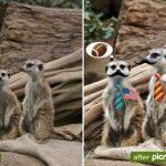 Google añade edición las imágenes en los álbumes Web de picasa