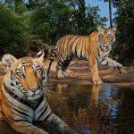 Descargar fondos de pantalla de National Geographic gratis