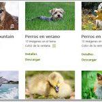 Temas para Windows 8 de animales gratis