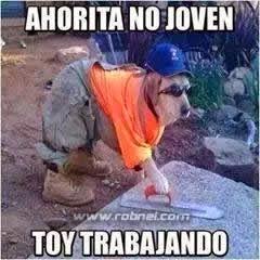 Ahorita No Joven perro trabajando